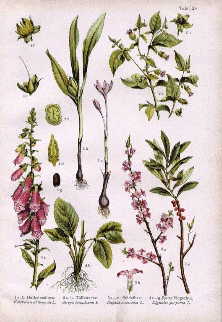 botanicalprints1