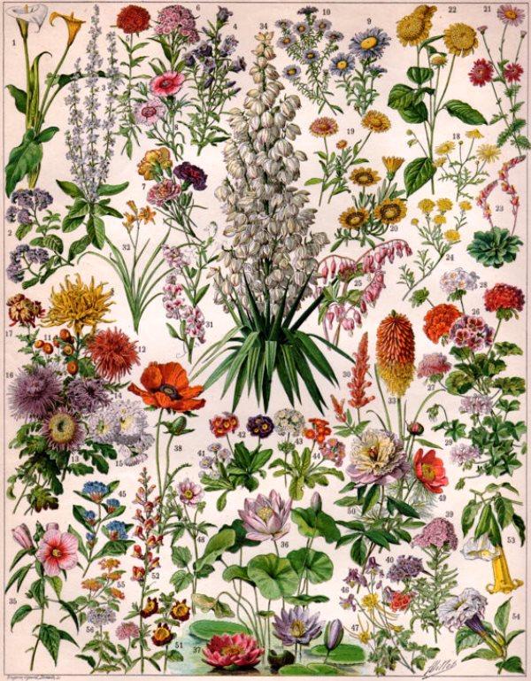 botanicalprints10