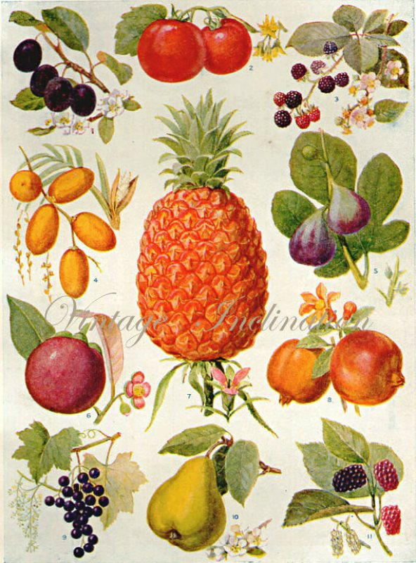 botanicalprints4