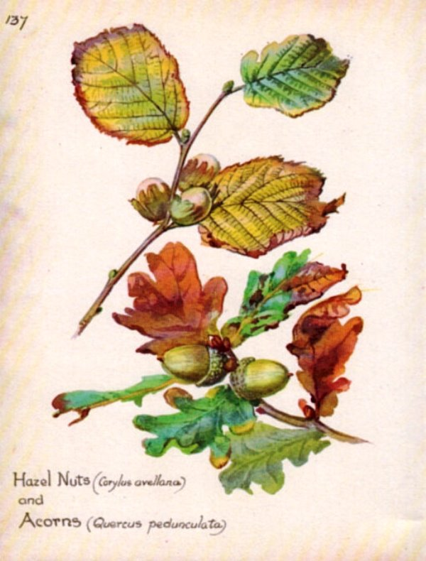 botanicalprints6