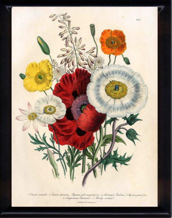 botanicalprints7