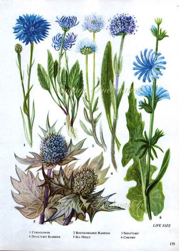botanicalprints8
