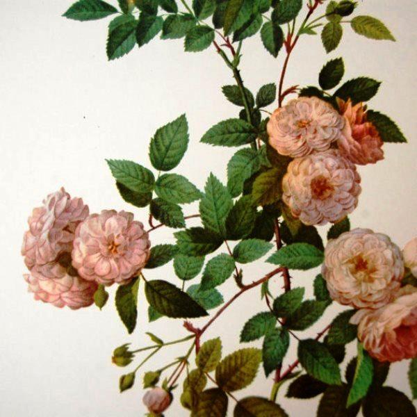 botanicalprints9