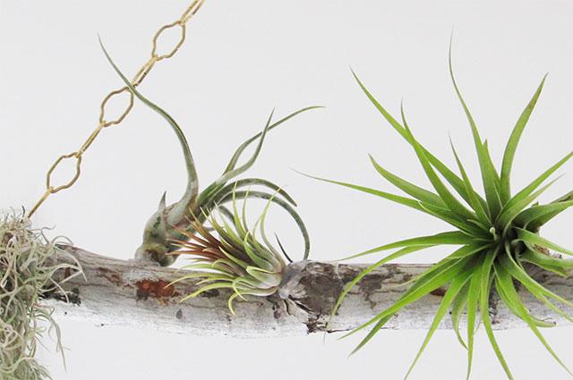 airplantswing10