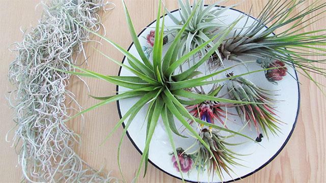 airplantswing1