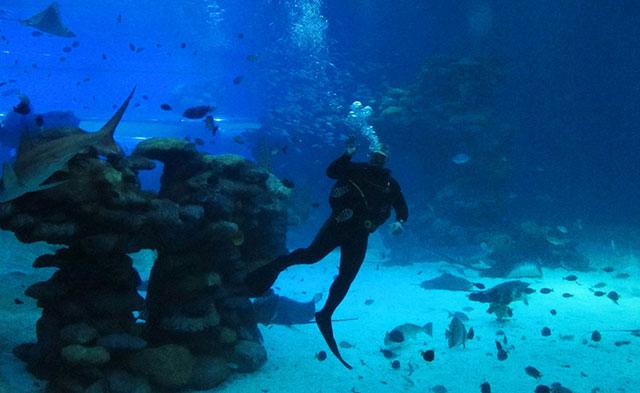 sharkseaworld10b