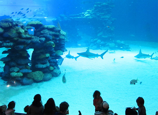 sharkseaworld1b
