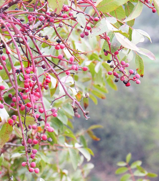 beetandstrawberrymuffines7