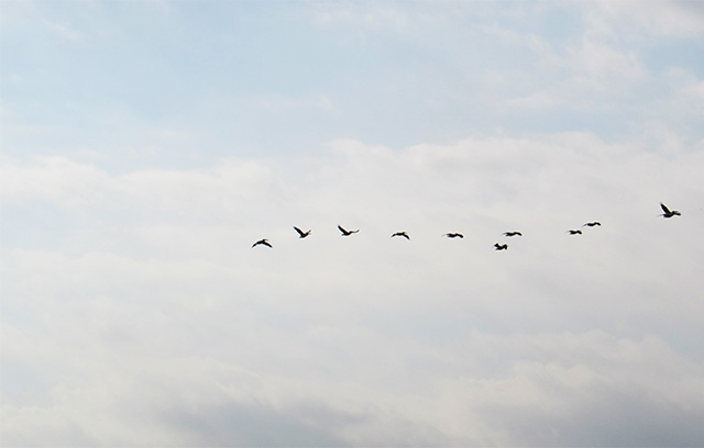 birdsinhula1