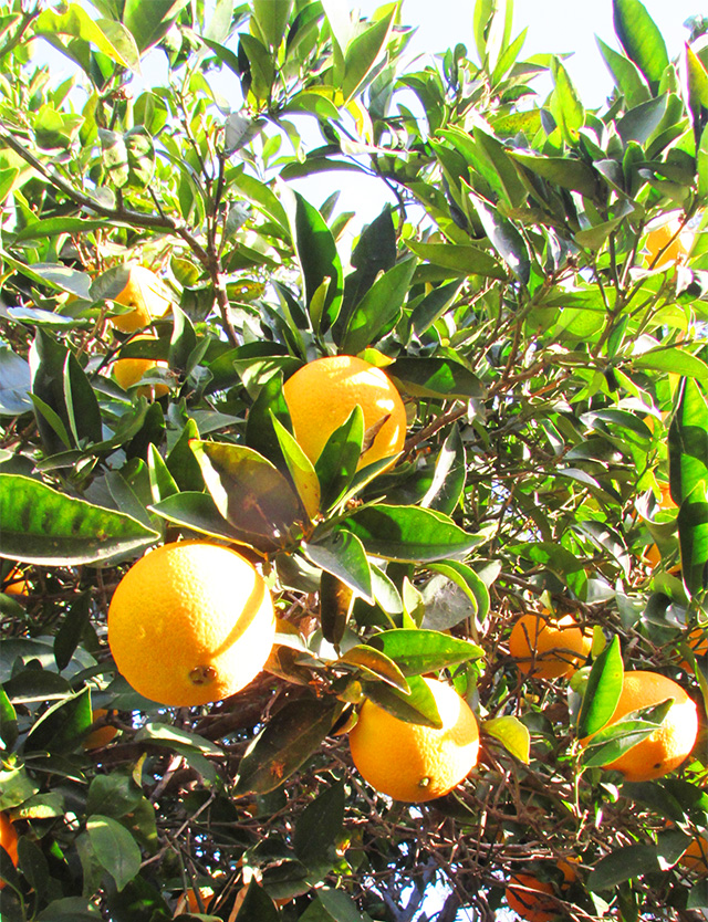 orangejamforblog5