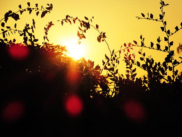 sunsetlivnim138152